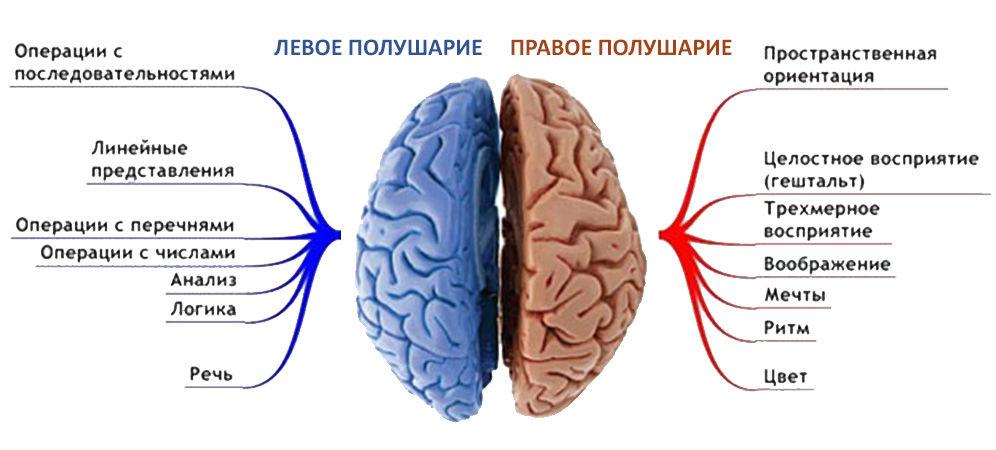 http://ar-bambino.ru/thumb/2/06gTsvQJqr2LM55SGJiZ6w/r/d/mozg.png
